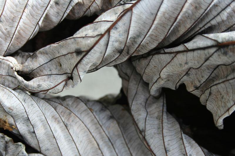 Rainforest Detail