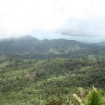 Yunque Rainfores from Tower