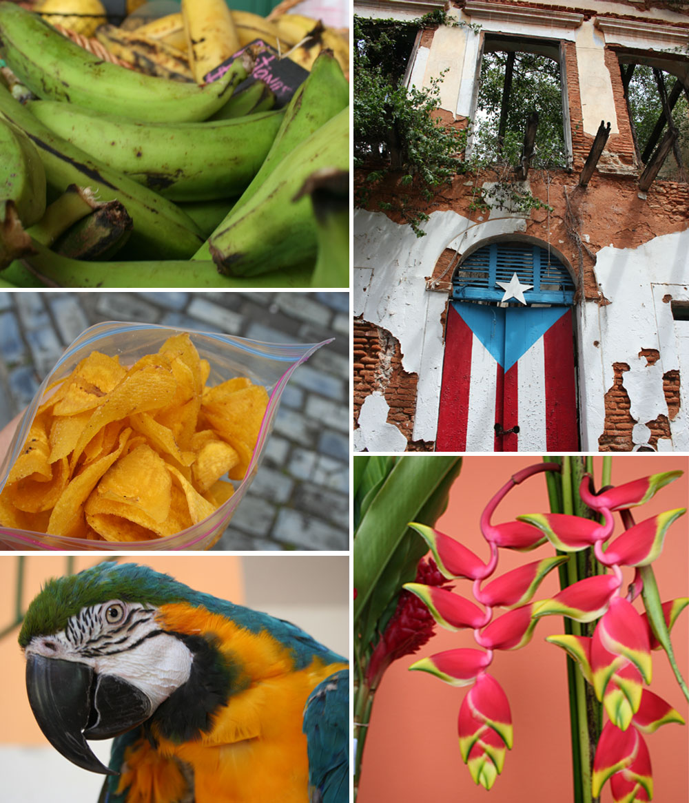 Plantains, parrots, flowers...Puerto Rico!
